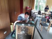 Bienen (1)